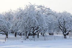 Orchard in winter Stock Images