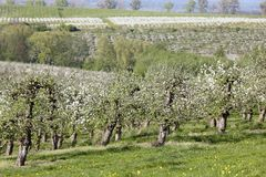 Orchards Stock Image