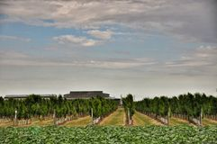 Orchards. Agriculture in Taman Stock Images