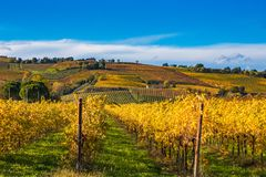 Autumn orchards Stock Images