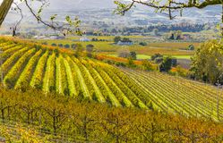Autumn orchards. Orchards in the fall in the hills Stock Photo