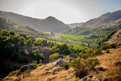 Orchards. In the hills outside oceanside ca Stock Photography