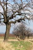 Orchards in Poland Stock Photography