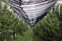 Orchards Protective Nets Stock Image