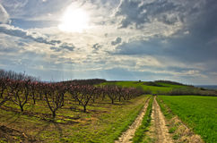 Orchards and wheat fields at early spring Royalty Free Stock Photography
