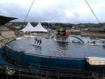Orche in Marineland Antibes immagine stock libera da diritti