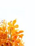 Orchidée à l'arrière-plan blanc Photographie stock libre de droits