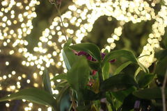 Orchidée à la nuit Images stock