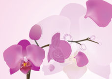 Orchidée illustration stock