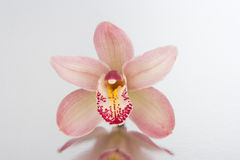 Orchidée Photos stock