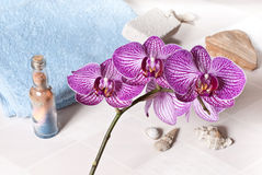Orchidée Photographie stock