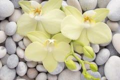 Orchidée Photo libre de droits