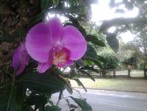 Orchidée Photographie stock