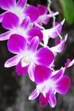 Orchidée Images libres de droits