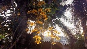 Orchidée Photos libres de droits