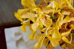 Orchidée Photo stock