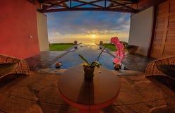 Orchidée au coucher du soleil Images stock