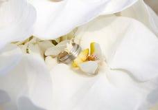 Orchidée avec des anneaux de mariage Photographie stock libre de droits