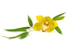 Orchidée avec des lames de bambous d'isolement sur le fond blanc Photographie stock