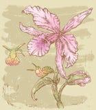 Orchidée avec des oiseaux Photos stock