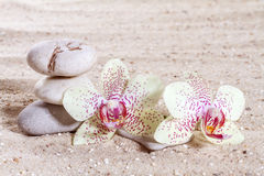 Orchidée avec des pierres de zen Photo libre de droits
