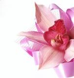 Orchidée avec la bande de satin Photographie stock