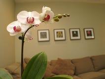 Orchidée blanche Photos stock