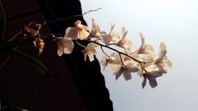 Orchidée blanche Photos libres de droits