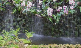 Orchidée blanche et pourpre près de la cascade Photo libre de droits
