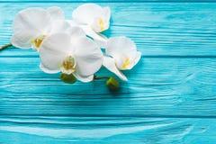 Orchidée blanche sur le fond bleu Photographie stock