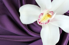 Orchidée blanche sur le satin pourpré Photos stock