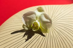 Orchidée blanche sur un vase à argile photo stock