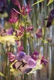 Orchidée bleue d'arrangemen floraux, chrysanthème, clématite Image libre de droits