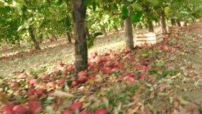 Orchidée complètement des pommes au sol banque de vidéos