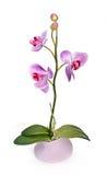 Orchidée d'isolement photo stock