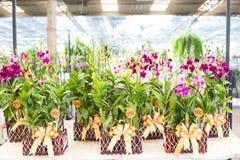 Orchidée dans des pots de fleur en bois Photos stock