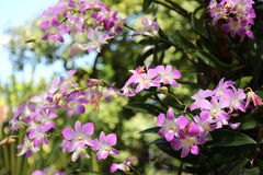 Orchidée dans la forêt images stock