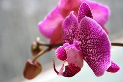 Orchidée dans la violette images stock