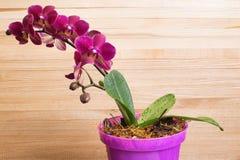 Orchidée dans le bac photo stock