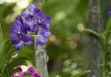 Orchidée dans le sauvage image libre de droits