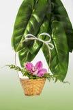 Orchidée dans un panier en osier images stock