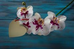 Orchidée de blanc de branche Photos stock