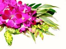 orchidée de bouquet Image libre de droits