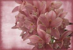 Orchidée de cru Photo stock