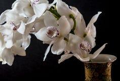 Orchidée de Cymbidium Photos libres de droits