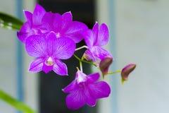Orchidée de fleur avec le fond Photographie stock