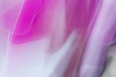 Orchidée de floraison Photo libre de droits