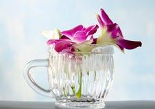 Orchidée de la Thaïlande en verre sur le fond bleu Photographie stock libre de droits