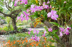 Orchidée de Phalaenopsis en serre chaude d'orchidée photographie stock libre de droits