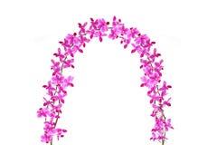 orchidée de porte Photos libres de droits